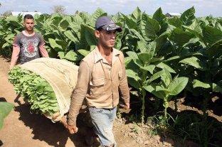 Tabacaleros acordaron con los productores un aumento en el precio de 59,95%