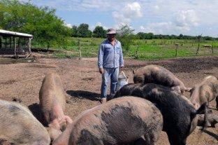 Cómo evitar el virus en el manejo de la granja porcina