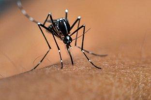 Venado Tuerto: confirman el primer caso de dengue en la ciudad
