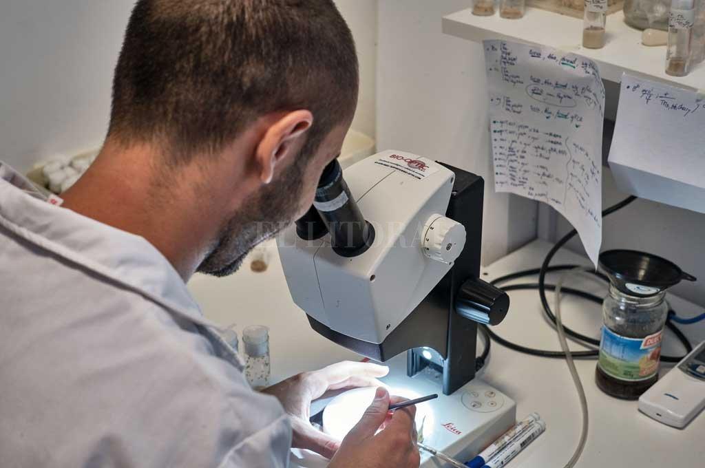 """Lo importante sería lograr un antiviral lo suficientemente específico para tratar este nuevo virus, porque va a seguir entre nosotros"""", asegura Iglesias. Crédito: Gentileza IAL (CONICET/UNL)"""