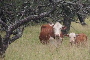 La ganadería y el desafío del carbono  -  -