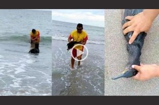 Video viral: guardavidas de Río Negro salvaron a biguá de morir atragantado