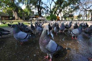 Las 50 mejores fotos de la cuarentena obligatoria -