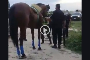 Dos detenidos por organizar una carrera de caballos durante la cuarentena -  -