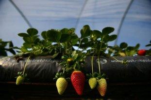 España contratará a desempleados y extranjeros como mano de obra agrícola