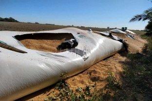 Rompieron silobolsas y robaron soja en un campo en Salto Grande