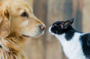 Los gatos y perros dejarían de ser considerados animales comestibles en China