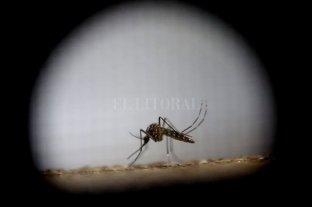 No se olviden del dengue