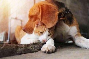 Se conmemora el Día del animal en Argentina