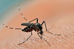 En Formosa ascienden a 4.157 los casos positivos de dengue