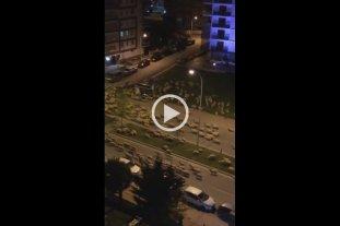 """Video: Cientos de ovejas """"invadieron"""" una ciudad de Turquía"""