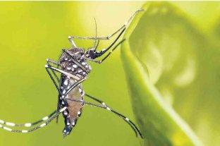 Se incrementan los casos de dengue en la provincia de  Jujuy