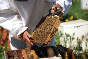 Brindan capacitaciones para formar nuevos operarios apícolas en el centro sur santafesino