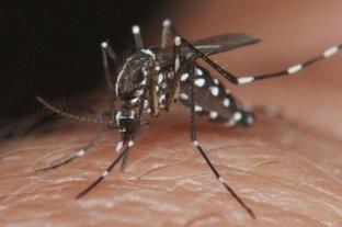 Casi 6.000 casos de dengue se registraron la última semana en el país