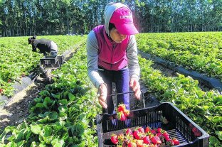 Senadores de la UCR solicitan financiamientopara pymes y trabajadores independientes