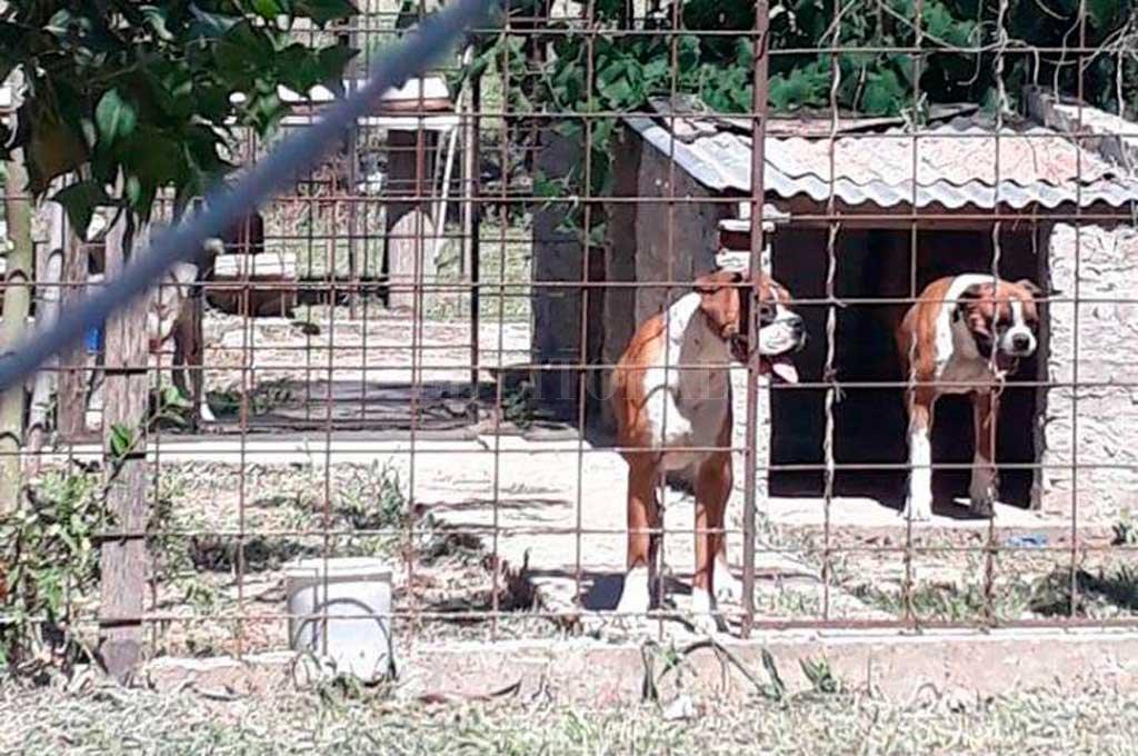Ocho canes fueron secuestrados el 1° de diciembre pasado, luego del último ataque. Crédito: Archivo El Litoral