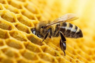 """Mel Gibson demandó a una apicultora chilena que vende """"Miel Gibson"""""""