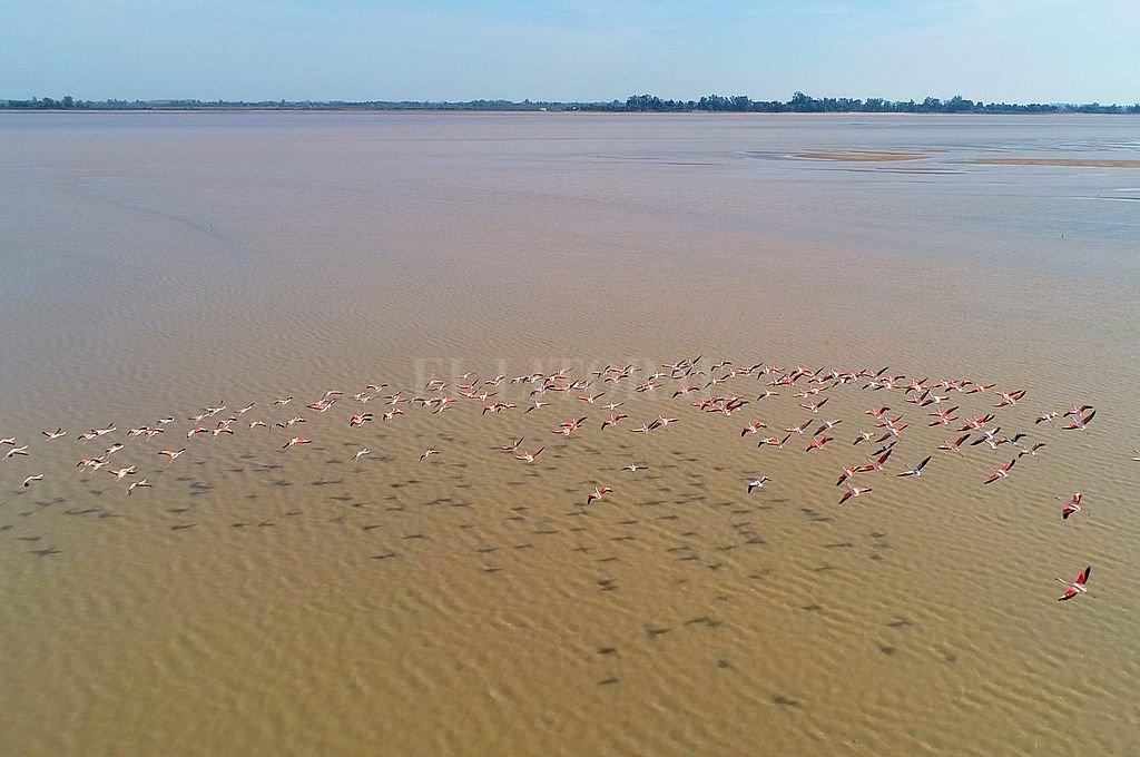 """Los flamencos rosados, una postal única que forma parte de la producción del El Litoral """"Donde Nace la Laguna"""", que será distinguido por el Concejo. Crédito: Fernando Nicola (Drone)"""