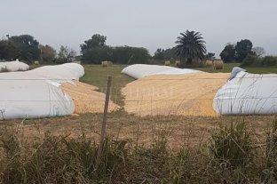 Inseguridad rural sin freno: se multiplican los delitos en Humberto Primo