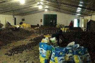 Donación de más de 30.000 kilos de papa a través de la Rural de San Justo