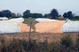 Preocupación por ataques a silobolsas en distintos sectores del campo argentino - La imagen corresponde a Humberto Primo, donde se registró este tipo de episodio. -
