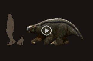 Hallaron restos de un animal prehistórico en Arroyo Seco