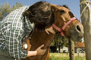 Nuevo sistema por internet de reacreditación en programas de sanidad animal