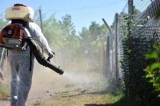 Reportan 249 nuevos casos de dengue en la última semana en Misiones