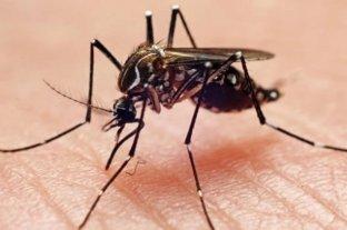 Dengue: expertas argentinas captaron la proteína en movimiento en células vivas infectadas -  -
