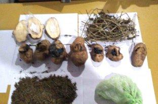"""Detienen a """"dealer"""" en La Plata que vendía marihuana y cocaína adentro de papas"""