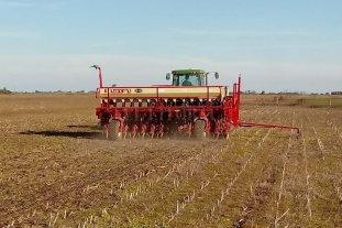 Avanza la cosecha de la soja tardía  - La intención de siembra, según se estimó, tendría una disminución del orden del 6 al 8 % en relación a la superficie sembrada en la campaña 2019, que fue de 378.000 ha. -