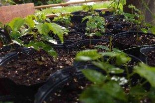 San Carlos Norte impulsa un programa forestal para reducir la huella de carbono -  -