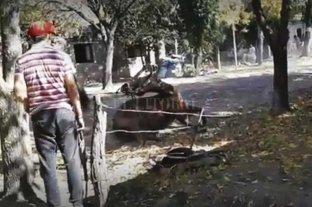 """La yegua murió por los golpes - Las imágenes reflejan el castigo al que fue sometido el equino y no coinciden con lo declarado por el """"amansador"""" y el dueño del campo donde ocurrió el hecho.  -"""