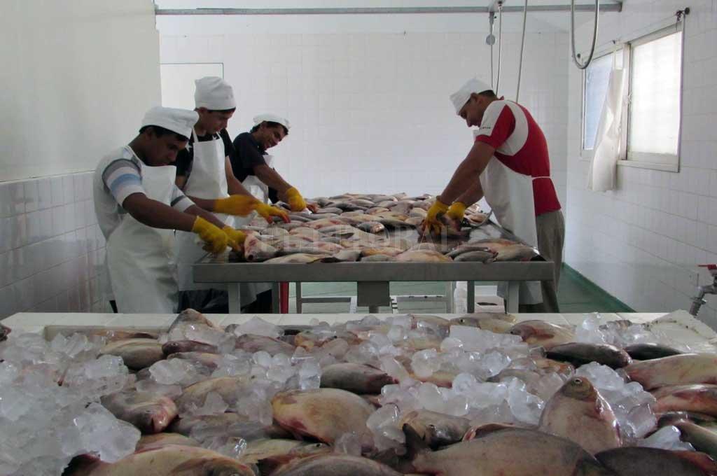 Frigoríficos tendrán menor nivel de exportación de pescado en lo que resta del año. Crédito: Archivo El Litoral