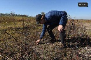 Estudios arqueológicos en la Setúbal en busca de los rastros aborígenes - Colastiné Norte. Las primeras prospecciones se realizaron en los bañados de la Setúbal sobre la orilla Este, detrás del camping de UPCN. -
