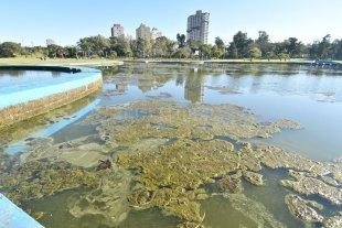 Parque del Sur: la gran cantidad de mosquitos preocupa a los vecinos - Lago Artificial. Así se encuentra actualmente el espejo de agua del lago principal del Parque. -