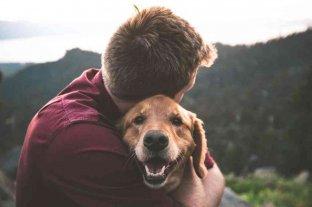 """Hoy se celebra el Día Nacional del Perro, el """"mejor amigo del hombre"""""""
