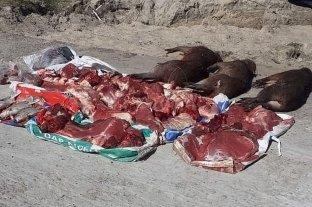Corrientes: llevaban carpinchos faenados y 80 kilos de carne vacuna