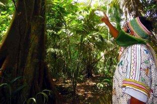 """Bolivia: alertan sobre riesgo de """"etnocidio"""" para algunas comunidades indígenas ante el coronavirus"""