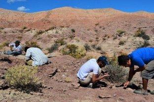 Río Negro: presentaron fósiles de un dinosaurio alado