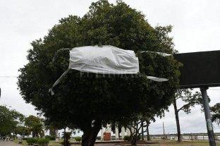 Corrientes: los árboles se ponen barbijos por el Día del Medioambiente