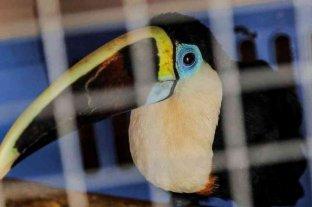 Detuvieron a 50 traficantes de fauna en Colombia