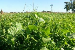 """Siempre verde, el """"paquete natural"""" para la re-evolución agrícola"""