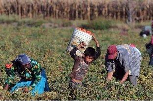 El Gobierno presenta un programa para la erradicación de la explotación laboral infantil