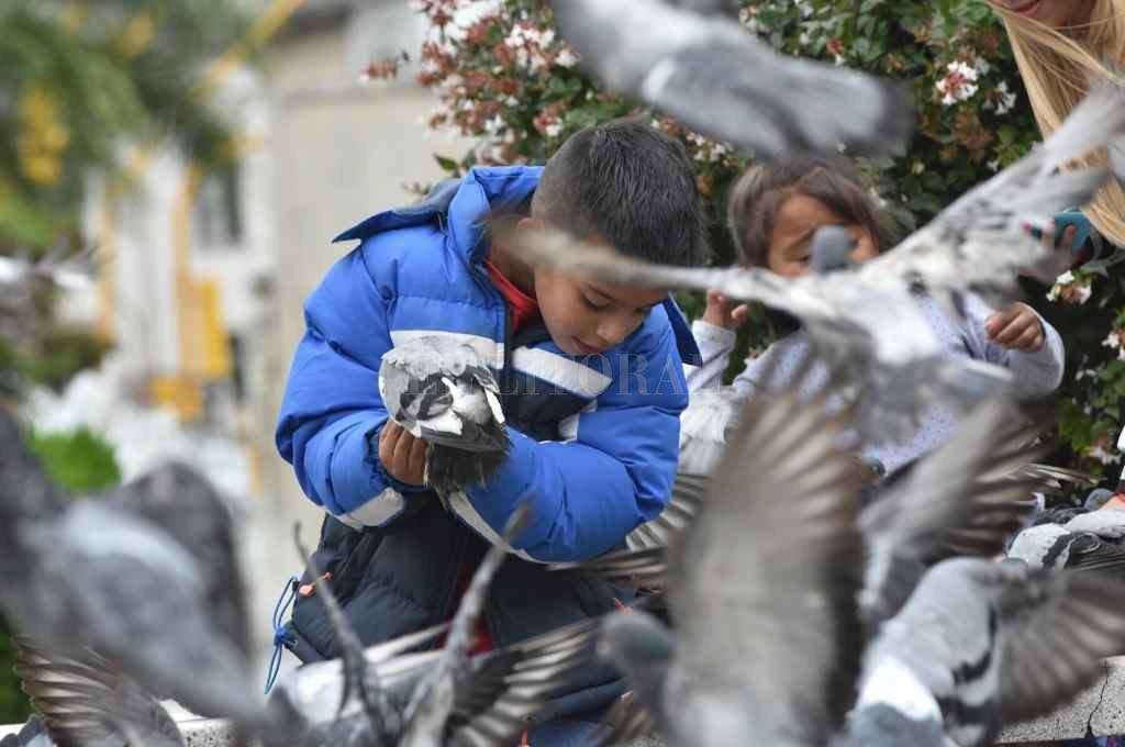 En diciembre del año pasado, el Concejo aprobó por ordenanza un Plan Municipal de Gestión Ética de la población de palomas en la ciudad, para controlar la natalidad de estas aves.    Crédito: Archivo El Litoral/ Flavio Raina