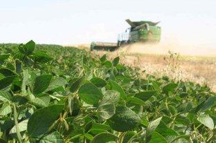Los precios de la soja y el maíz volvieron a subir en Rosario