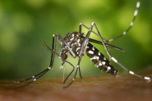 Ascienden a 5.098 los casos de dengue en la provincia de Santa Fe