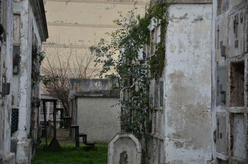 El registro gráfico es del 15 de este mes. Muestra el estado en que se encuentra un sector del Cementerio, con profusa vegetación que nacen de los pabellones. En otras fotos tomadas por este medio pueden verse lápidas rotas y otras irregularidades.    Crédito: Manuel Fabatía