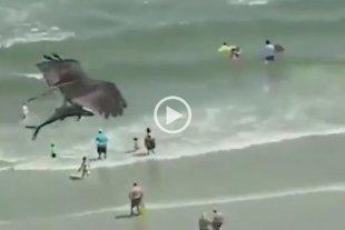 Video: Un águila atrapa con sus garras un tiburón -