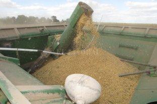 La soja subió $ 500 y cerró a $ 26.300 la tonelada en Rosario